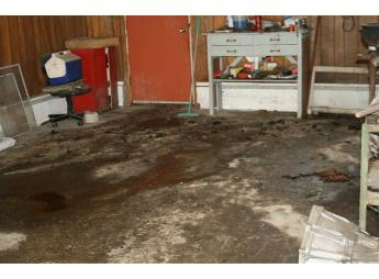 Gross filth - dog feces in garage