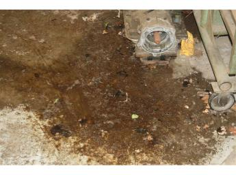 Gross filth  -  dog feces & urine on garage floor